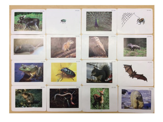 1st grade Which Animal Is It? by Cary Varela