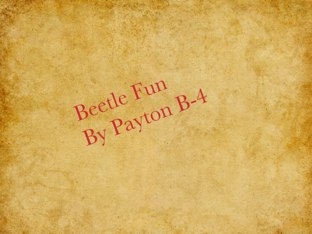 Payton's Beetle Project by Vv Henneberg
