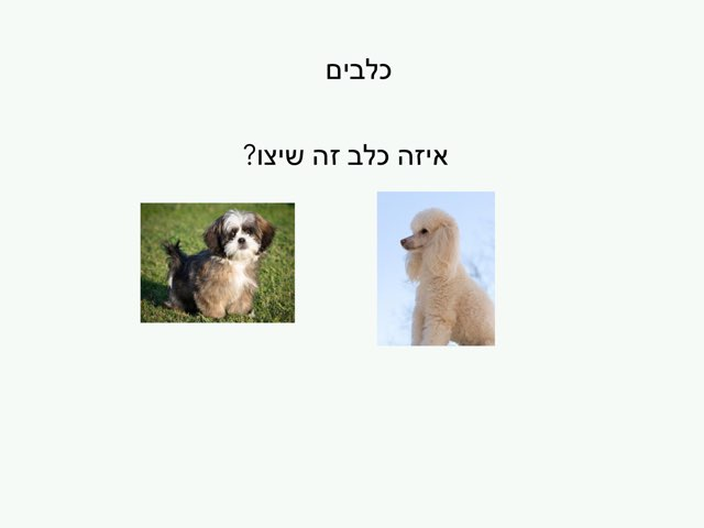 כלבים עידו by בית ספר קישון