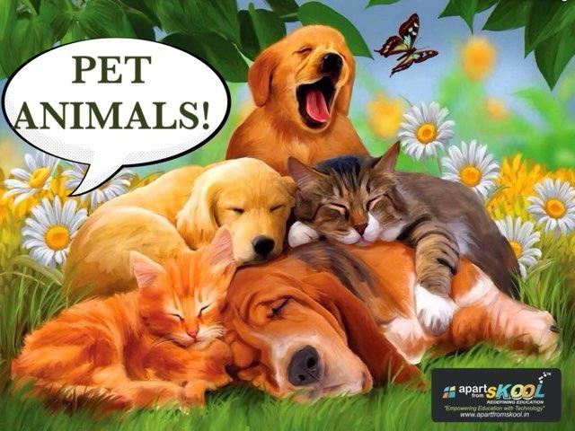 Pet Animals  by TinyTap creator