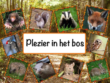 Plezier In Het Bos by Catherine Davies
