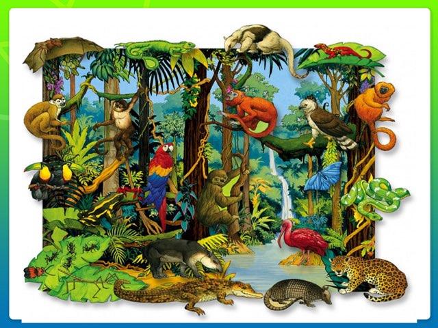 Rainforests Animals  by Macarena Quintana
