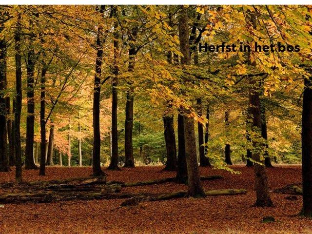 Herfst In Het Bos by Roel Van de Pol
