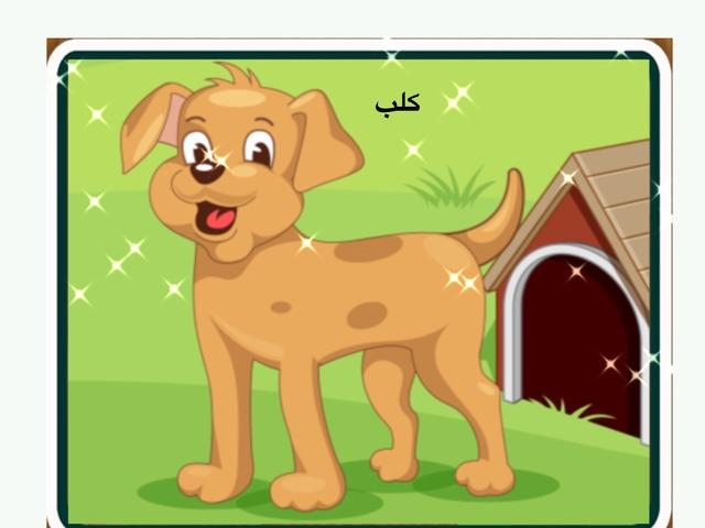 الحيوانات الأليفة by Saber Abo sabila