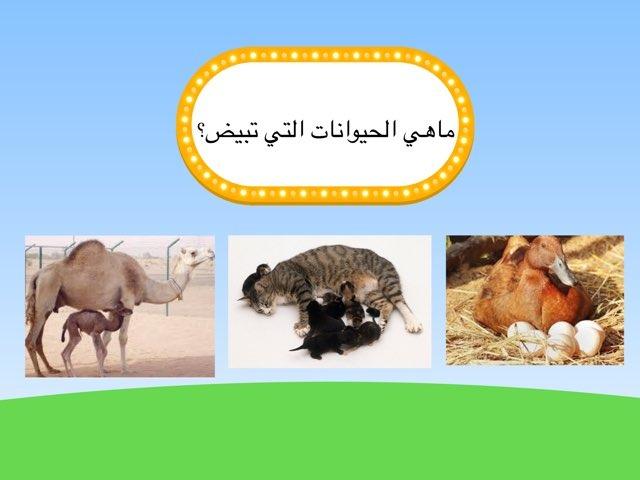 لعبة 4 by Noura Nasser