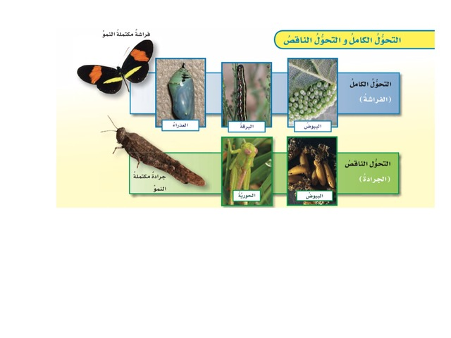 الصف الخامس الوحدة الثانية by علي الزهراني