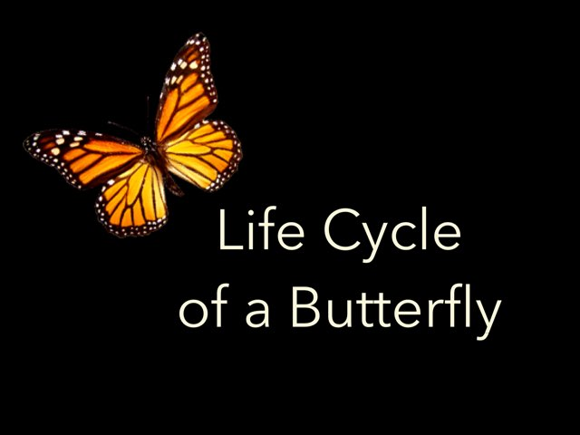 Life Cycle Of Butterfly  by Rebecca Grossman Kelly