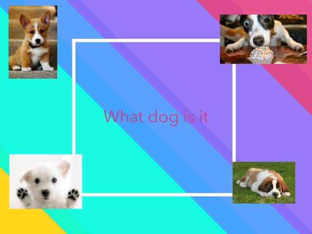 Guess That Dog by Frances Chapin