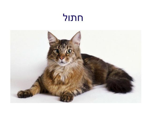 זיהוי חלקי גוף של חתול by dana dagan