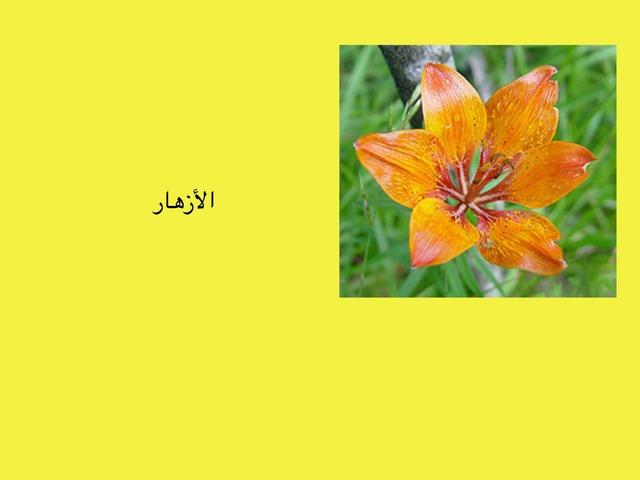 الأزهار by lama