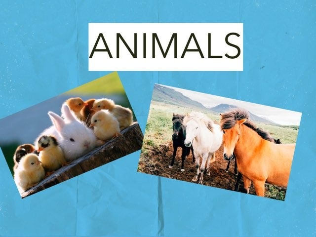 ANIMALS by Domingo Alemán