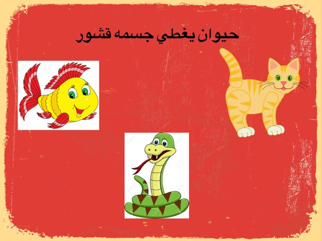 غطاء جسم الحيوانات by fatma ahmed