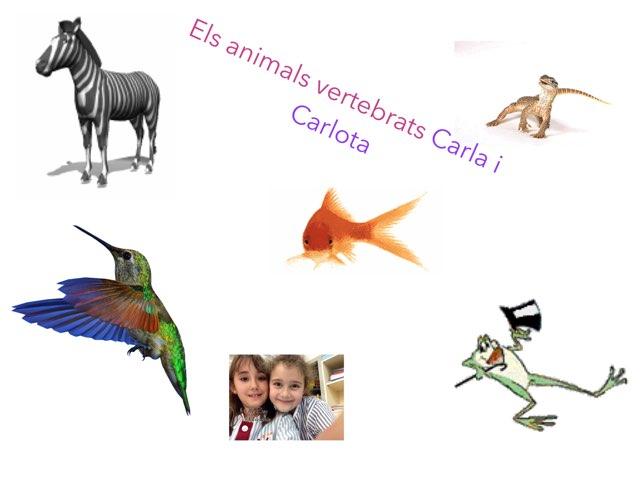 Els Vertebrats Carlota I Carla by Reporters