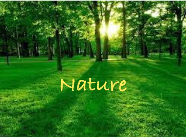Nature by نهى الحربي