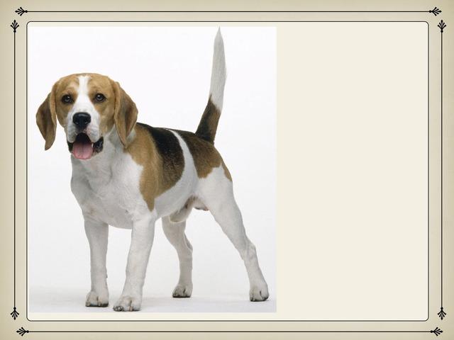 פאזל כלב by רונית רייטן-נסים