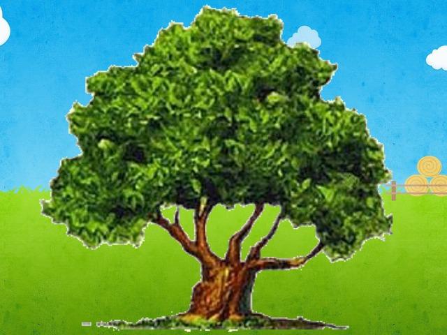 חלקי העץ by Moran Dahan