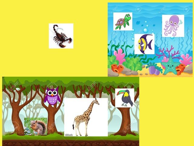 النظام البيئي by Hind Ali