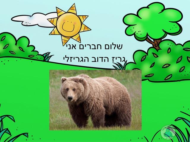 דוב by Adi Avraham