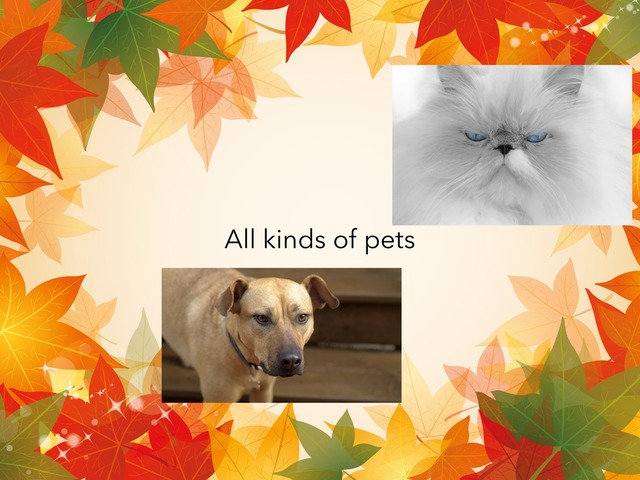 What About Pets by TinyTap creator