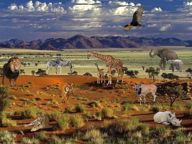 Animals In Habitat by Madonna Nilsen