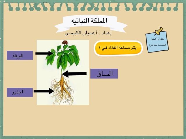 المملكة النباتيه by Hemyan Alkubaisi