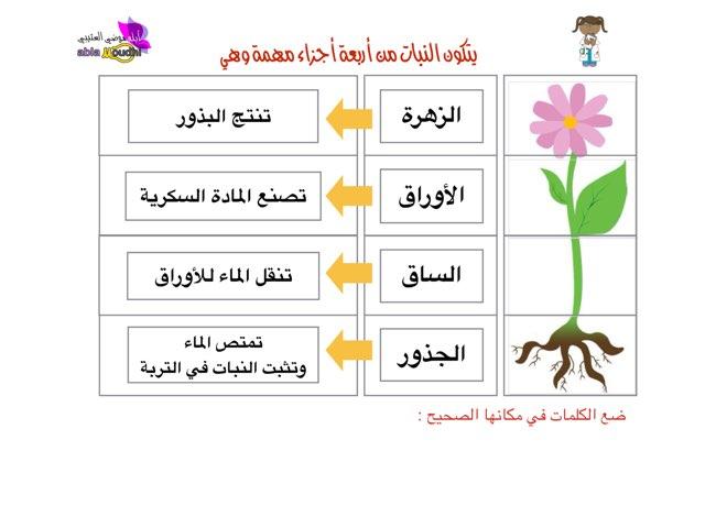 أجزاء النبات By Abla M Educational Games For Kids On Tinytap