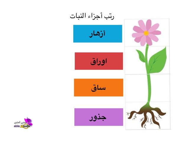 أجزاء النبات by abla M