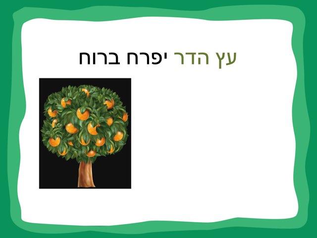 עץ הדר by סברין חסון