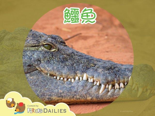 鱷魚 by Kids Dailies