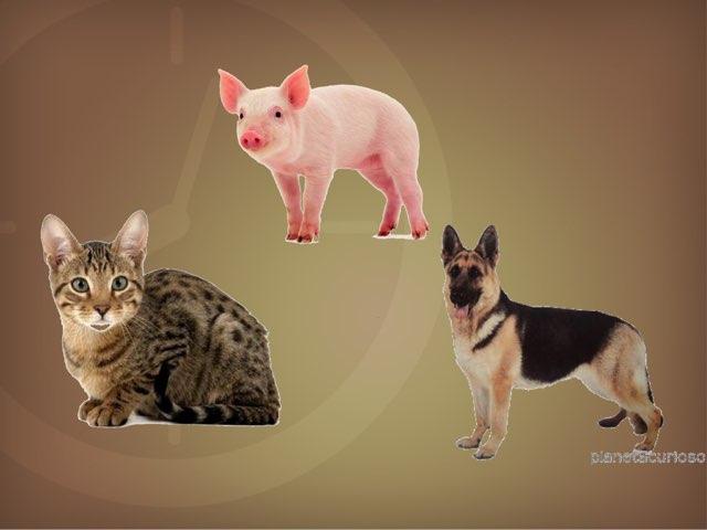 Animales by Hh2 elregato