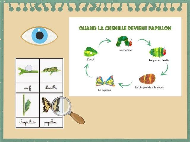 DE LA CHENILLE AU PAPILLON by véronique Favre