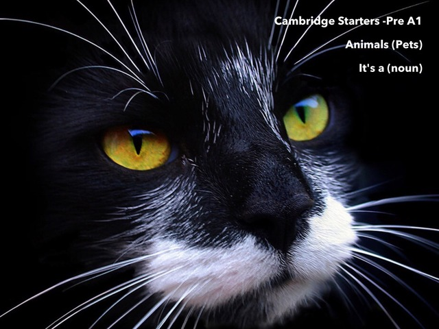 """Animals Pets - """"This is a (noun) - Cambridge Starters Pre A1 ESL EFL EAL by Teeny Tiny TEFL"""