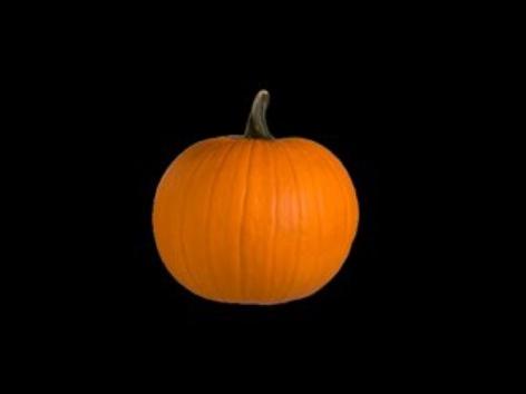 Pumpkin Book by S Fleming