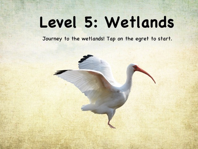 Life In The Biome: Level 5 - Wetlands by Natasha Sessoms