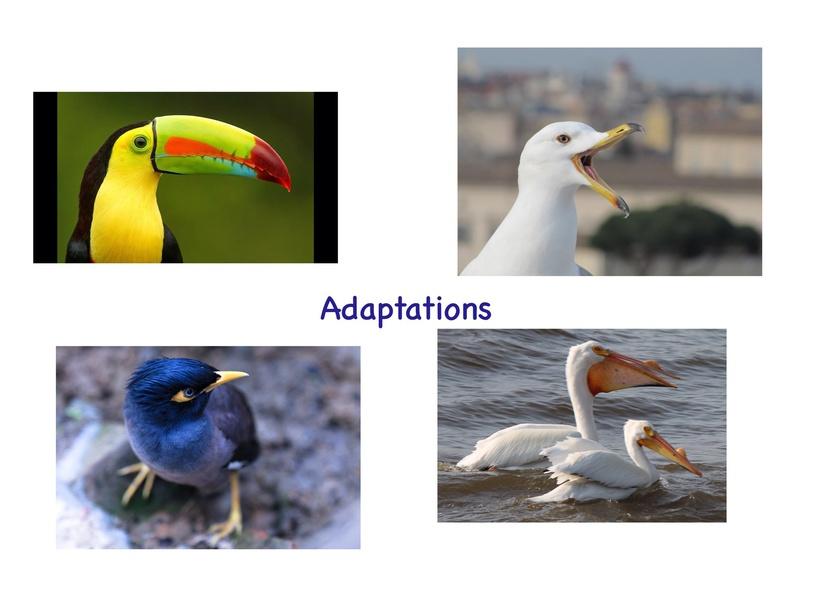 Adaptations by Jennifer Cunningham