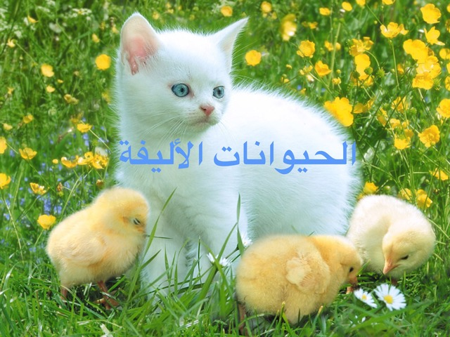 الحيوانات الأليفة by מוחמד דיאב