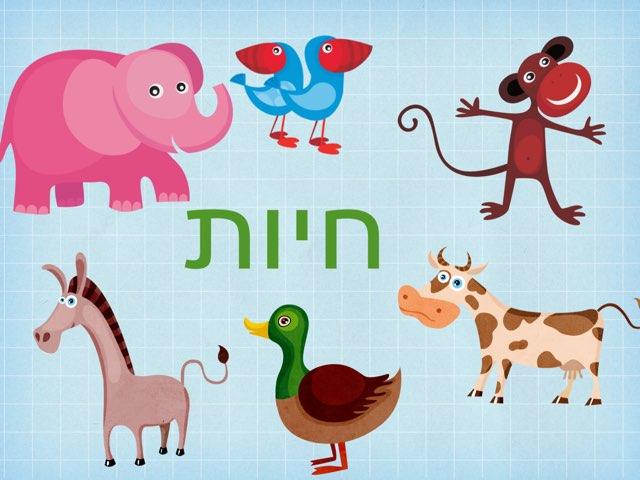 חיות - תתי קטגוריות by ליטל טויק קלינאית תקשורת