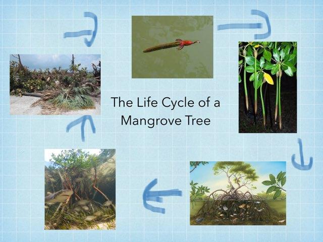 William's Mangrove by Diana Coyne