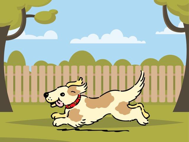 פאזל כלב בסיסי by מיטל לשם