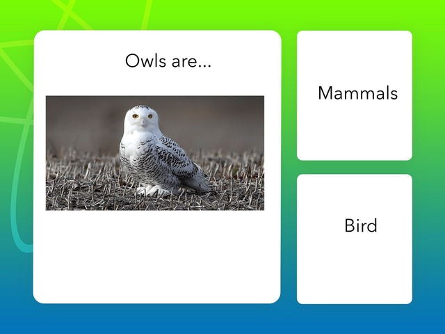 Na 24 Owl Quiz Bernardo And Lucas by Bilingual Adventure