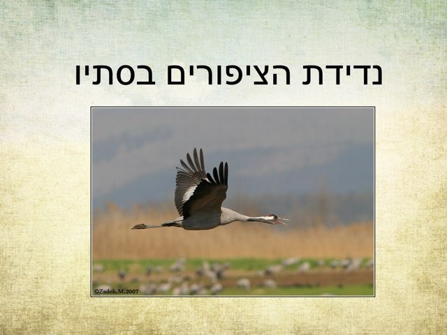 נדידת הציפורים בסתיו by Anat Rizenman Beit Issie Shapiro