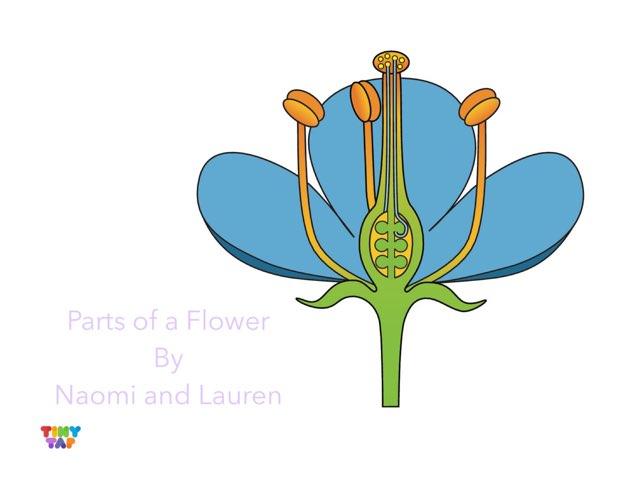 Naomi& Lauren's Flower by Ashley Shaw