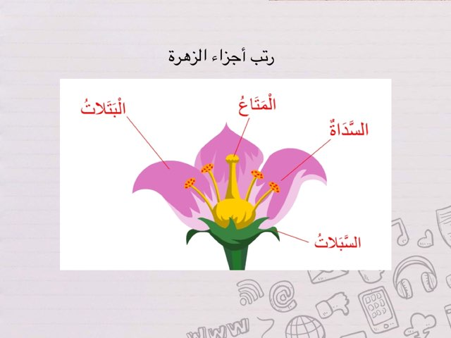 اجزاء الزهرة by Mai Teacher