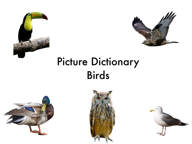 Picture Dictionary - Birds- by Hadi  Oyna