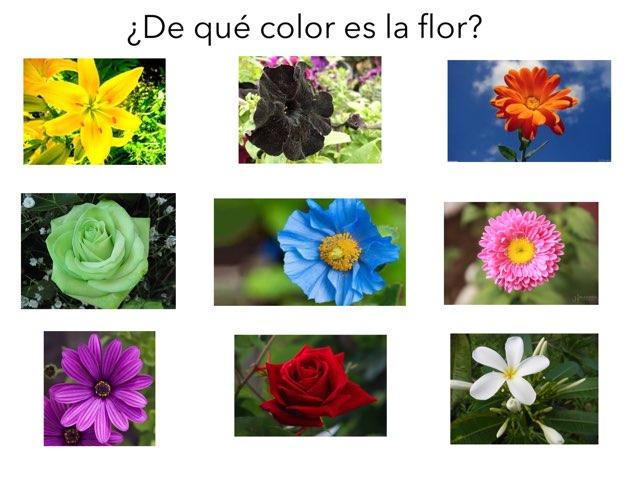 El Color De Las Flores by Nikki Duggleby