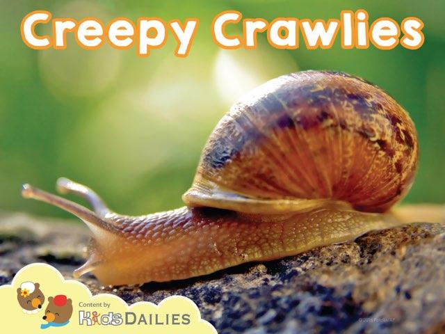 Creepy Crawlies by Kids Dailies