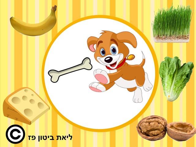 מזונם של בעלי החיים 1 by Liat Bitton-paz
