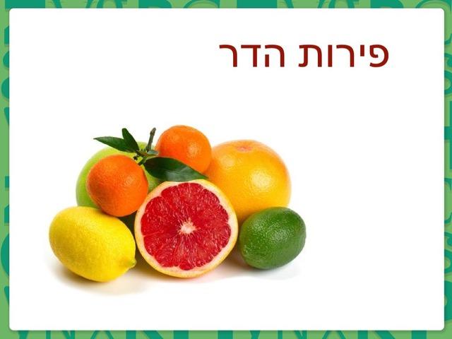 שיום פירות הדר by ילנה קרסיק