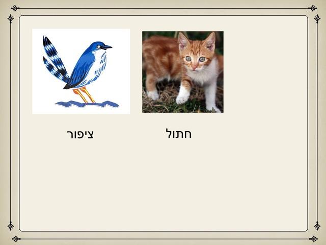 משחק פאזל התאמה  מילה לתמונה by iris Bnto