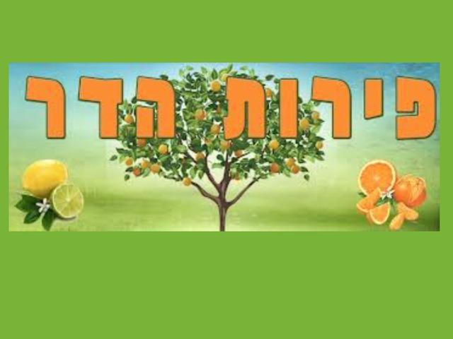 פירות הדר 2 by Yifat Simcha